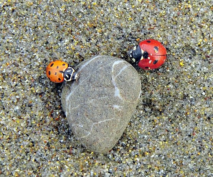 """""""Beach Rock"""""""