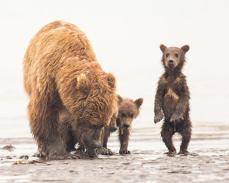 """Mom, we got company"""