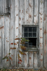 sumac and spotted barn, lake erie