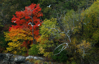 red tree and gulls, lake erie