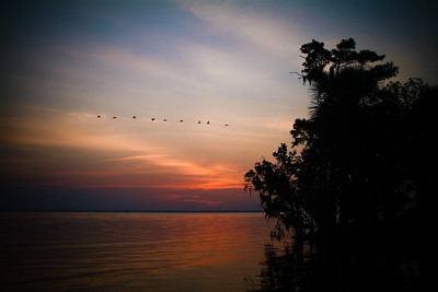 A flock of birds soar over Juniper Springs Inlet.
