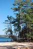 Lake Martin Shoreline