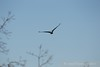 122016 Birds - 1 (8)