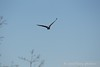 122016 Birds - 1 (9)