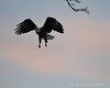 122016 Birds - 1 (13)