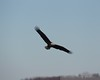 122016 Birds - 1 (7)