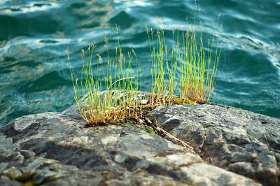 Where there is water-there is life