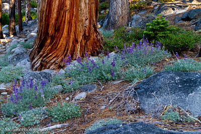 Some of the vegetation along one of the many trails around Meeks Bay in Lake Tahoe.