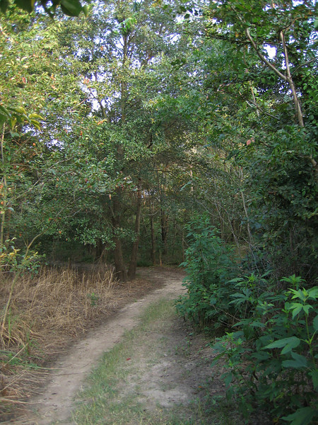 A nature trail at Lake Tawakoni State Park (209_0939)