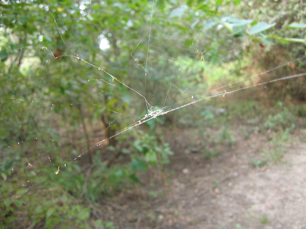 A spider web across the path (211_1104)