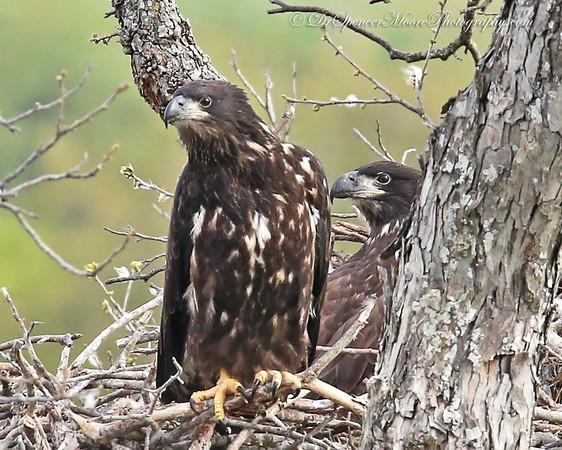Lake Waco Eagles 2014