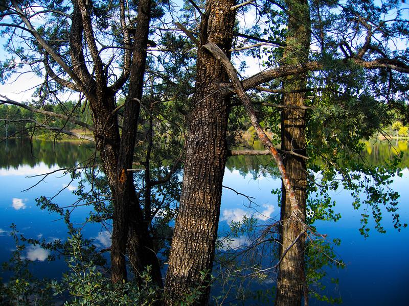 Water, Sky & Trees