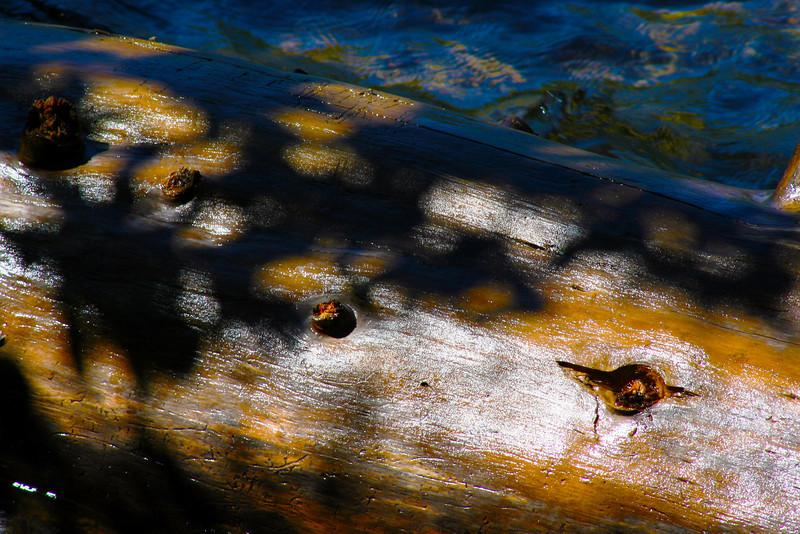 Fallen Log On The Water