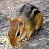 Chipmunks are so cute!