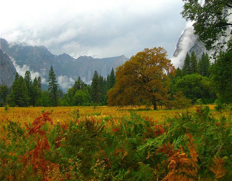 Fall Colors, Yosemite