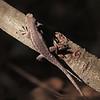 Lizard at El Dorado Park Nature Center - 28 Aug 2011