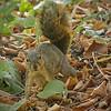 Squirrel at El Dorado Park Nature Center - 28 Aug 2011