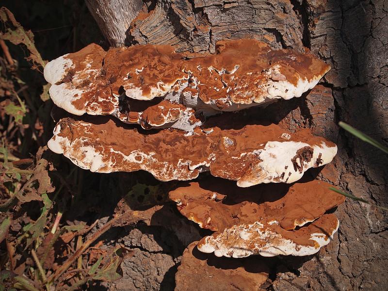 Fungus at El Dorado Park Nature Center - 28 Aug 2011