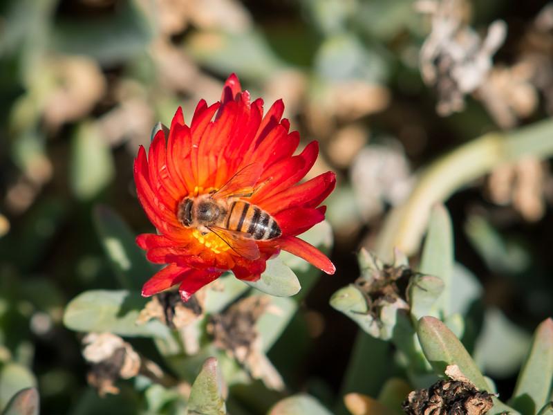 LA Country Arboretum - 1 Nov 2013