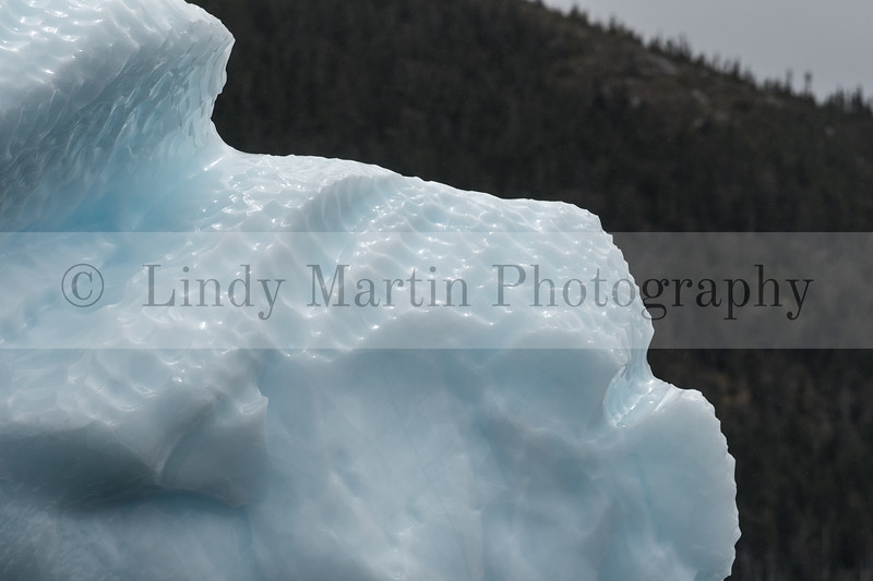 iceberg in Newfoundland  © Lindy Martin