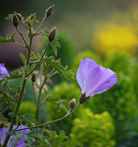 South Coast Botanical Gardens - 12 Mar 2011