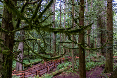 Cathedral Grove Pathwary