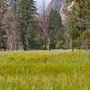 Meadow in Yosemite Valley - 10 Aug 2011