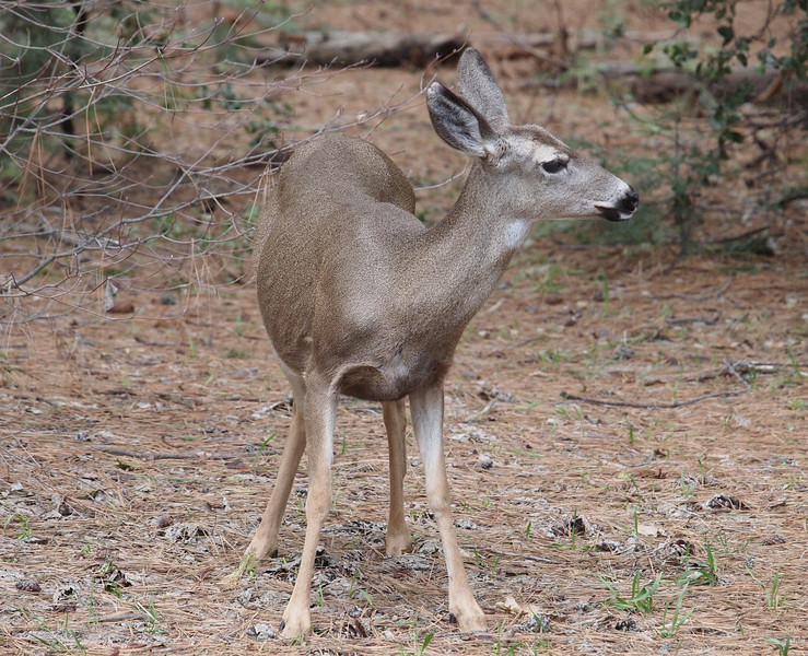 Wildlife in Yosemite Valley - 10 Apr 2011