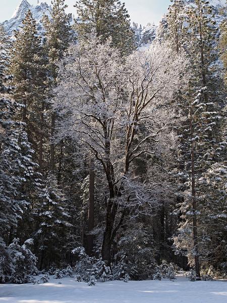 Morning in Yosemite Valley - 9 Apr 201