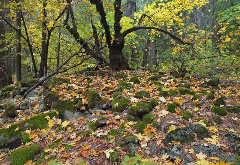 Mossy rocks near Fern Spring in Yosemite Valley - 22 Oct 2010