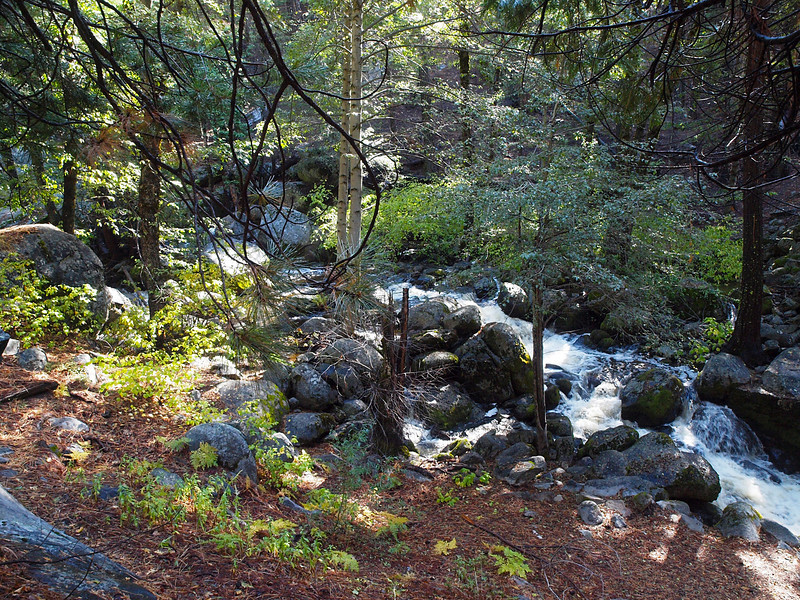 Alder Creek in Yosemite Valley - 25 Oct 2010