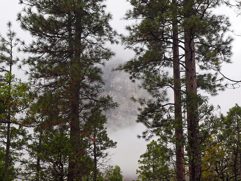 View through the trees in Yosemite Valley - 23 Oct 2010