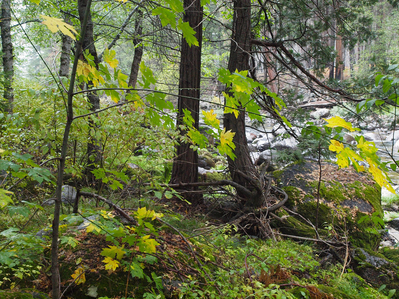 Foliage along the Merced river in Yosemite Valley - 23 Oct 2010
