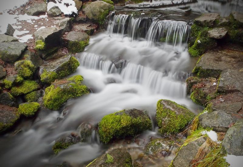 Fern Spring in Yosemite Valley - 8 Apr 2011
