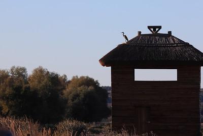 Grey Heron Sentinel — Szürkegém a vártán