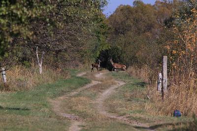 Deer — Szarvasok