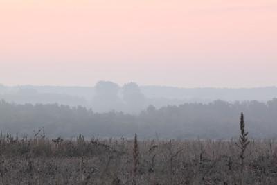 Misty Dawn Rose Sky — Párás reggel rózsaszín éggel