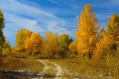 Poplar Grove — Nyárfaliget