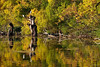 Tisza River, Dead or Alive