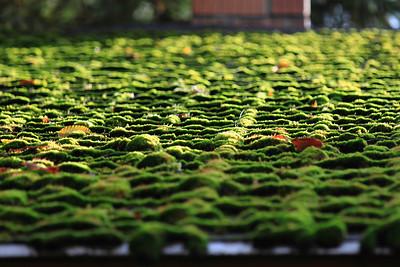 Mossy Roof — Mohos háztető