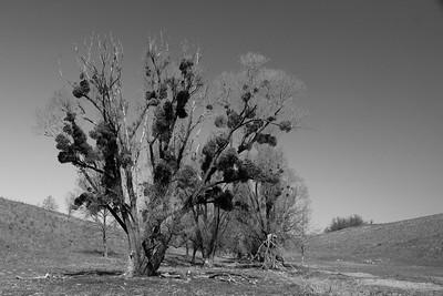 Bőszénfa Trees — Fák Bőszénfán