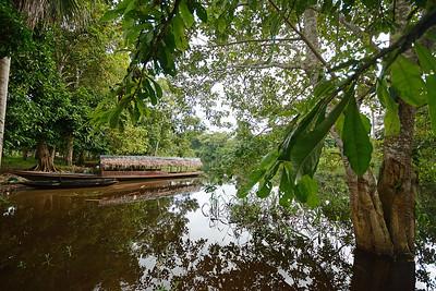 Pacaya-Samiria National Reserve - Peru Yarina - Rain Forest, Peru