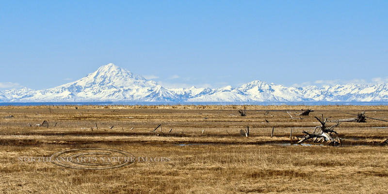 Mount Redoubt across Cook Inlet from the Kenai National Wildlife Refuge, Alaska. #422.07.