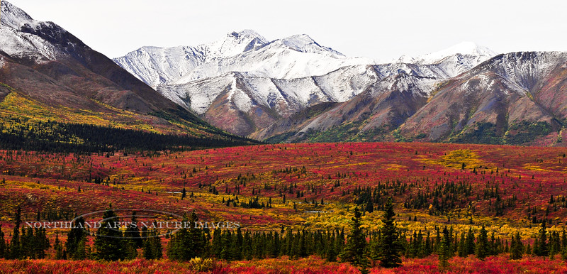 Autumn in the Taiga & Tundra. Alaska Range,Alaska. #829.077.