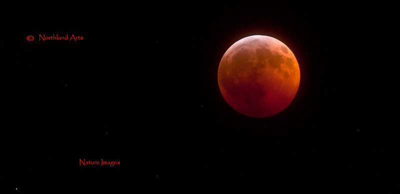 """Full eclipse of the mid winter """"Long Nights"""" moon viewed from Anchorage Alaska Dec.20.2010. #046. 1x2 ratio format."""