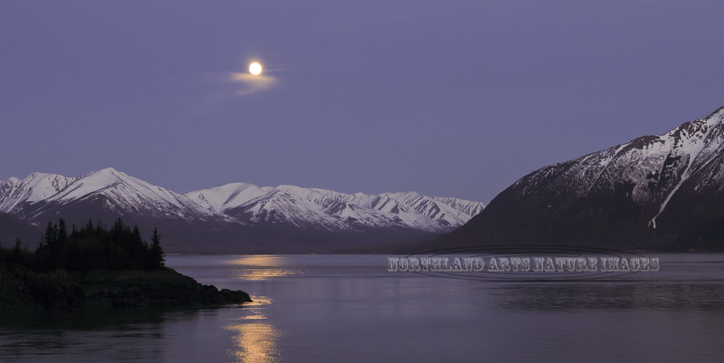 """The """" Flower Moon"""" of May rises over Turnagain Arm,Alaska. #523.023."""