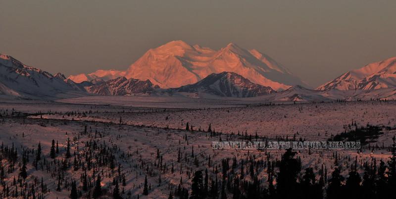 "Mourning 'Alpine glow"" on Denali. # 413.277."