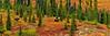 Moose in Fall Colors,Alaska. #828.769.