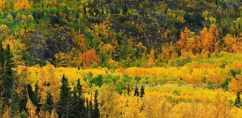 Fall colors in the Kenia Peninsula mountains. South of Cooper Landing,Alaska. #928.0099.