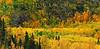 Fall colors in the Kenia Peninsula mountains. South of Cooper Landing,Alaska. #928.0099.